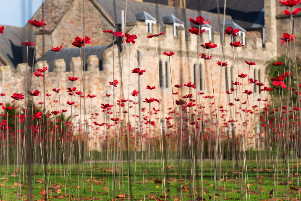 The Somerset Poppies - Bishops Palace, Wells, Somerset, UK. ID 826_4446