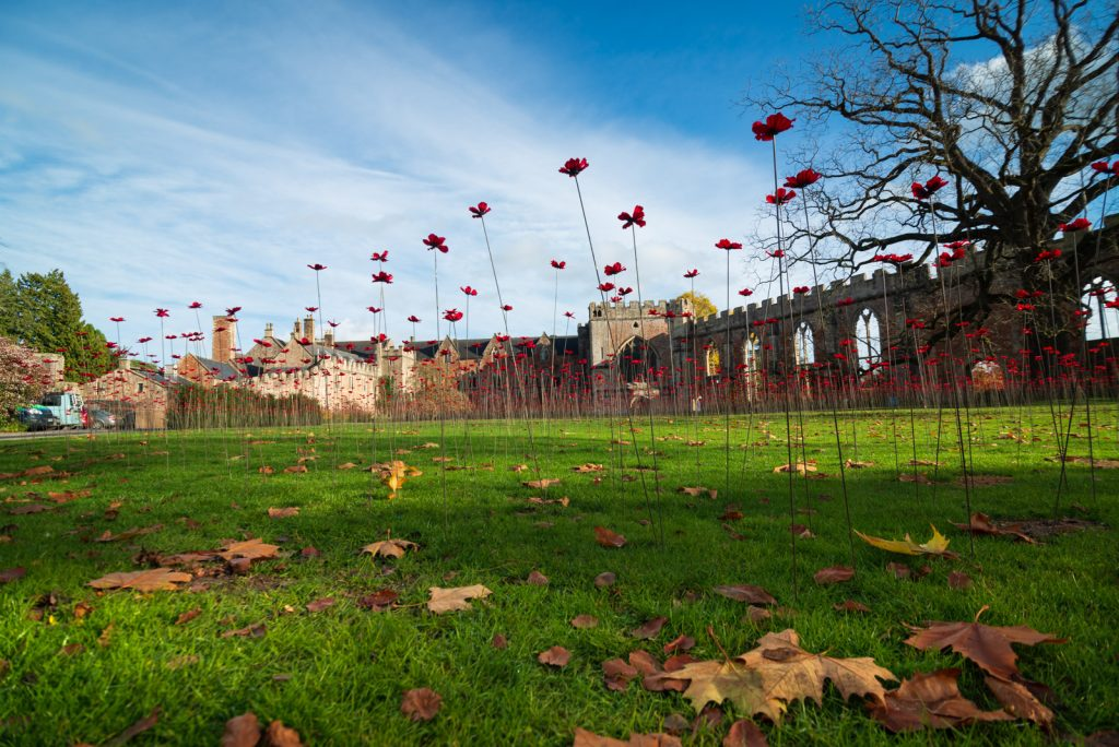 The Somerset Poppies - Bishops Palace, Wells, Somerset, UK. ID 826_4521