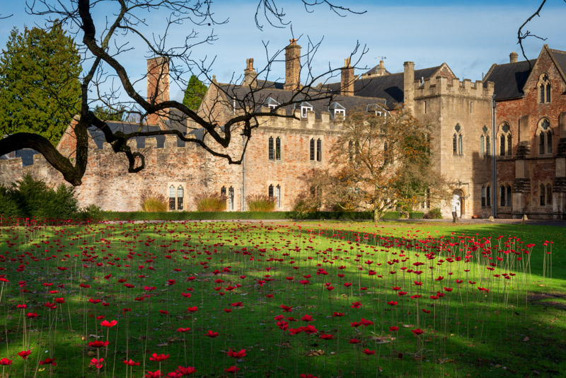 The Somerset Poppies - Bishops Palace, Wells, Somerset, UK. ID 826_4731