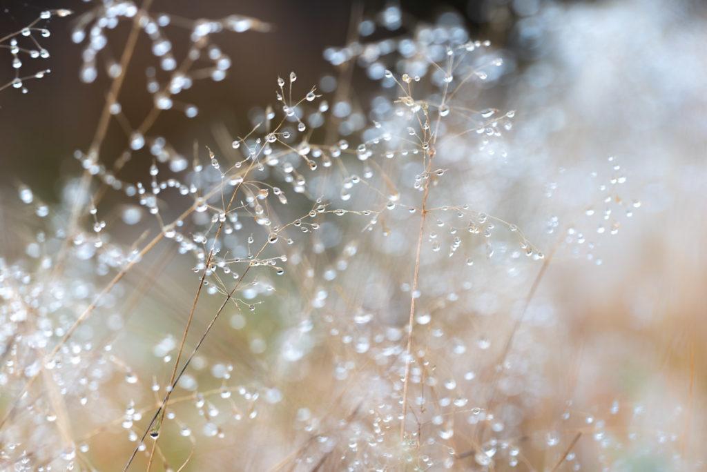 Winter Dew - Lynchcombe, Mendip Hills, Somerset, UK. ID 827_7736