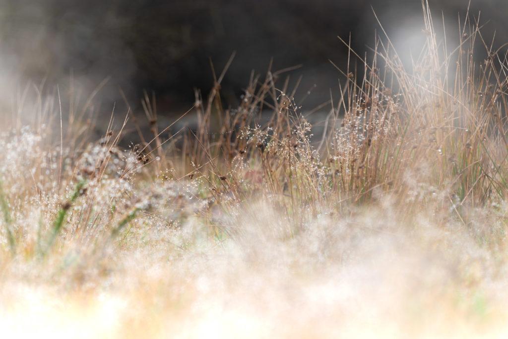 Winter Dew - Lynchcombe, Mendip Hills, Somerset, UK. ID 827_7741