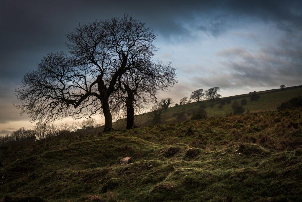 Winter Trees - Deerleap, Mendip Hills, Somerset, UK. ID 827_7876