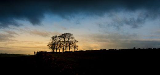 Beech Trees - Cooks Fields, Mendip Hills, Somerset, UK. ID 827_7922