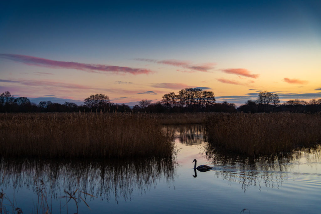 Early morning at Waltons Heath - Ham Wall, Somerset, UK. ID 827_8875