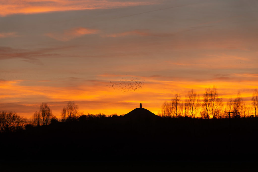 Glastonbury Tor Sunset with Starlings - From Hearty Moor, Somerset, UK. ID 827_9721