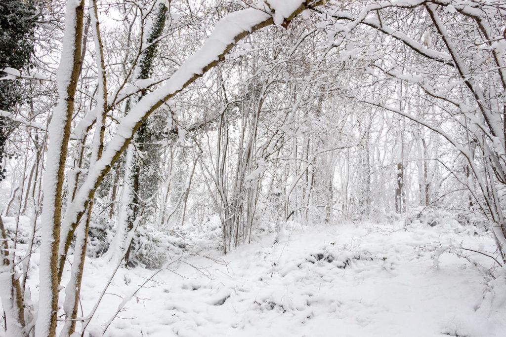 Kings Castle Wood in Winter - Nr Wells, Somerset, UK. ID IMG_1024