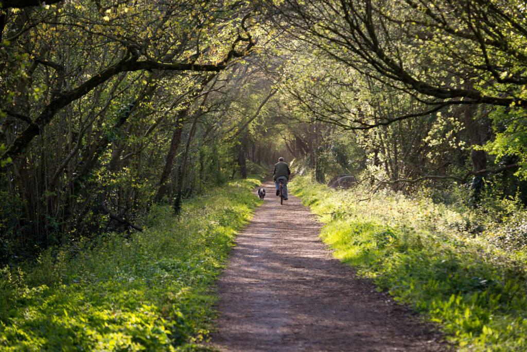 Park Wood Cycle Lane - Wells, Somerset, UK. ID 803_0406