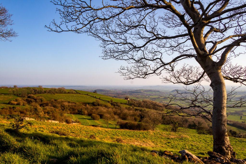 Lynchcombe - Mendip Hills, Somerset, UK. ID IMG_5203