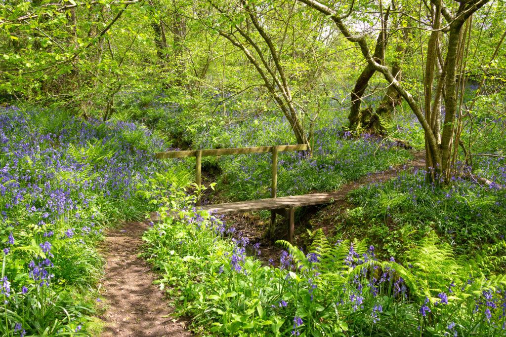 Woodland Bridge - Biddle Combe, Somerset, UK. ID IMG_0887