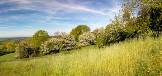 Spring Grassland - Lynchcombe, Somerset, UK. ID IMG_9058P