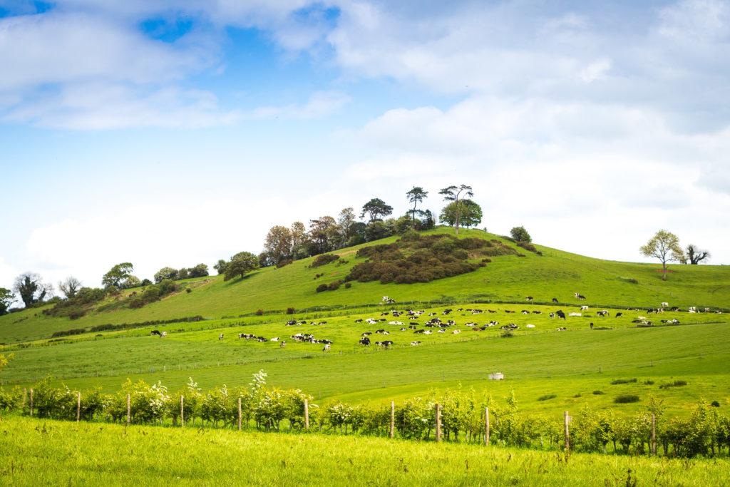 Trendle Hill - Wyke Champflower, Someset, UK. ID IMG_1329