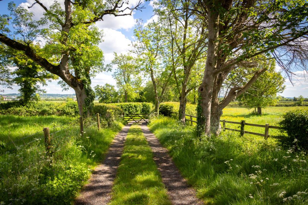 Country Lane - Hornblotton, Somerset, UK. ID IMG_0389