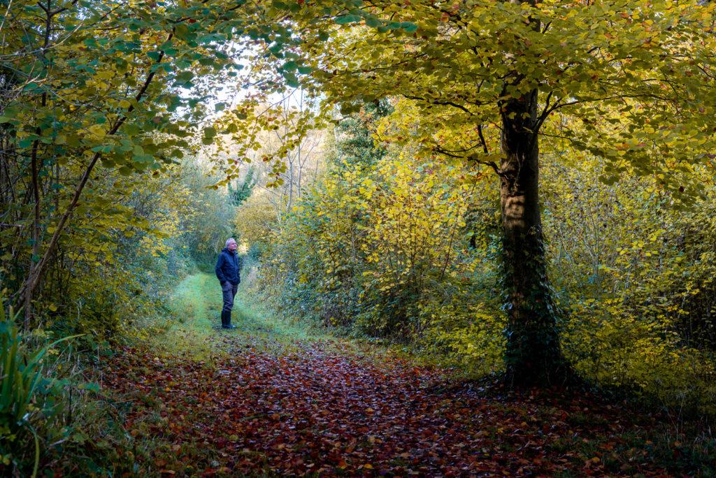 Loxley Wood - Somerset, UK. ID JB1_1373H