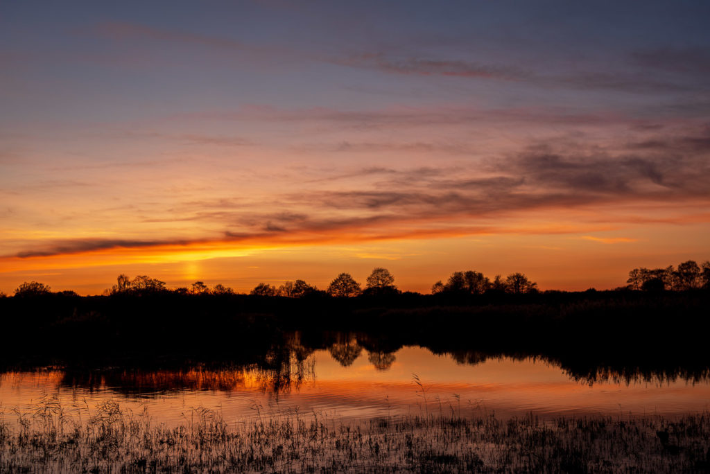 Sunset - Walton Heath, Ham Wall, Somerset, UK. ID JB1_4107