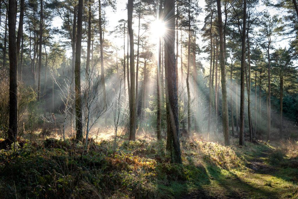 Stockhill Wood - Mendip Hills, Somerset, UK. ID JB1_0552