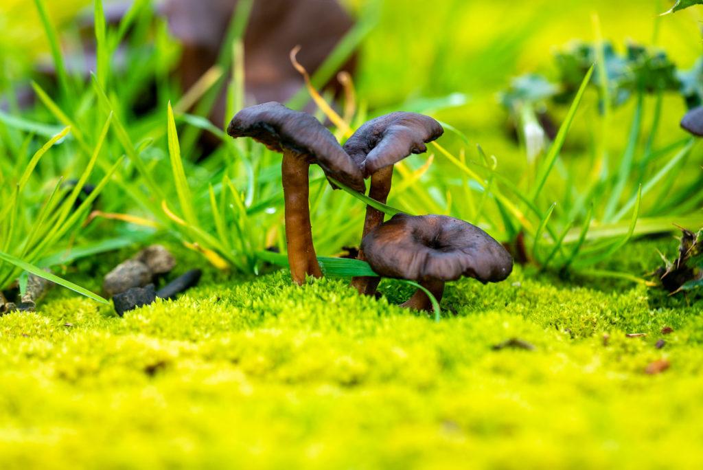 Fungi - Lynchcombe, Somerset, UK. ID JB1_2801