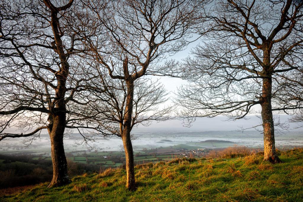 Lynchcombe - Mendip Hills, Somerset, UK. ID JB1_4335