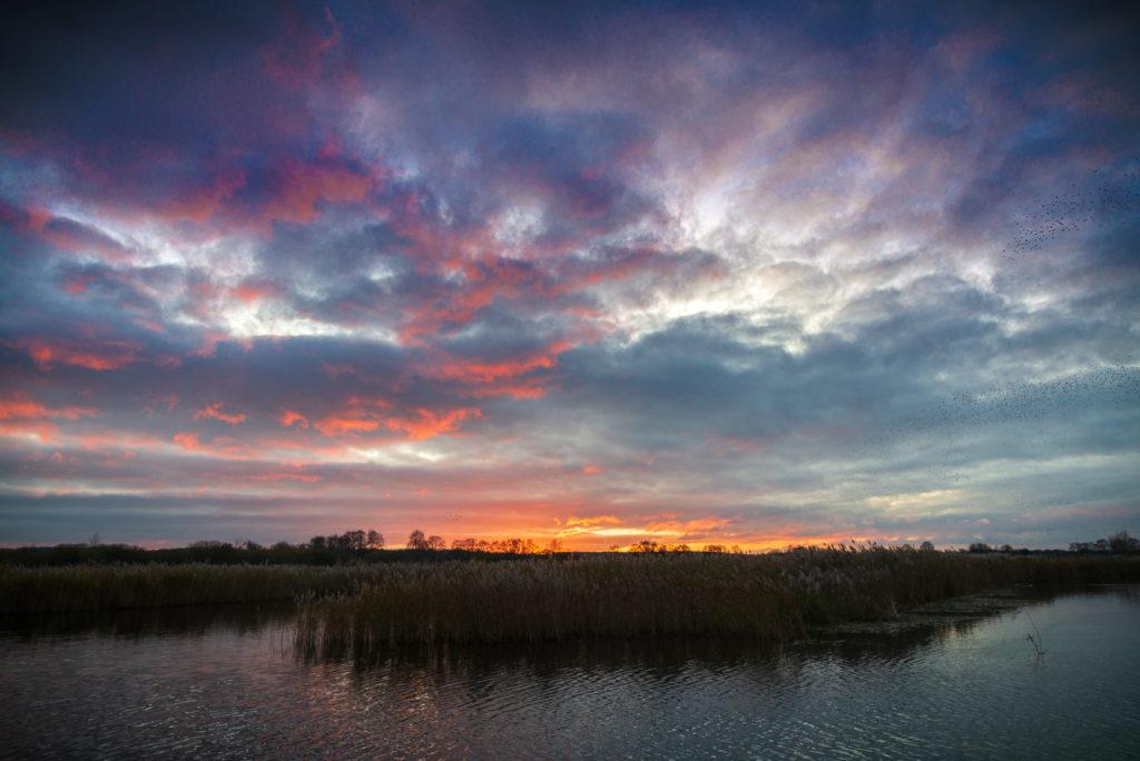 Ham Wall Sunset - Avalon Marshes, Somerset, UK. ID JB1_5947