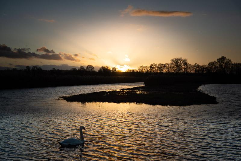 Swan in the sunset - Ham Wall, Somerset, UK. ID JB1_7065