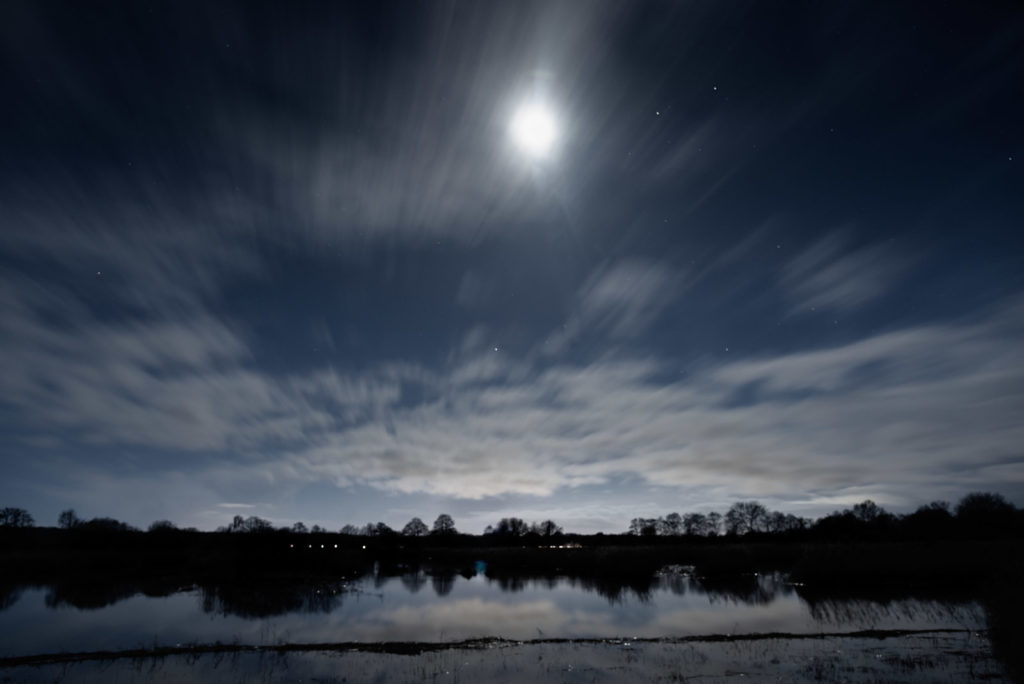 Cold Moon - Ham Wall, Somerset, UK. ID JB1_8977