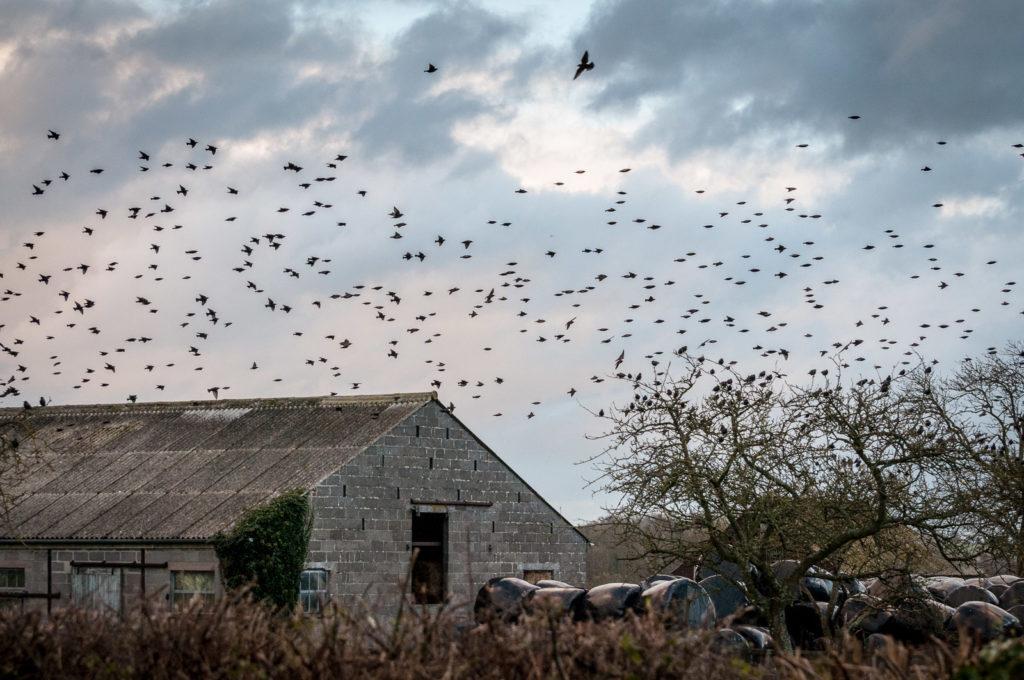 Starling Farm - Old Stileway Farm, Somerset, UK. ID DSC_1573