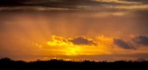 Starlings cross the sky - Shapwick Heath, UK. ID DSC_3017