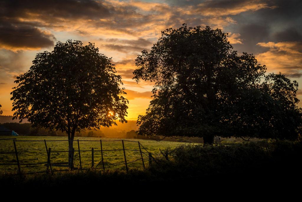 Tower Hill Sunrise - Tower Hill, Horsington, Somerset, UK. ID 823_3690