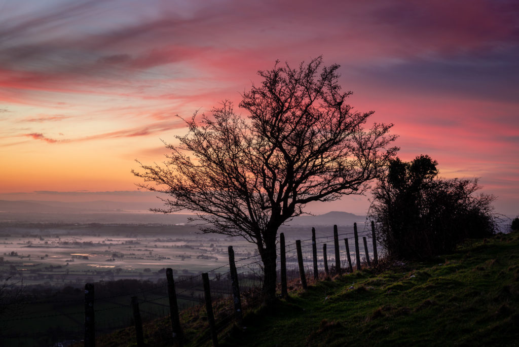Top Field - Lynchcombe, Mendip Hills, Somerset, UK. IF JB1_3284