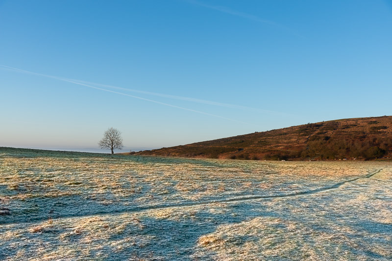 Frost - Cross Plain, Mendip Hills, Somerset, UK. ID JB1_3663