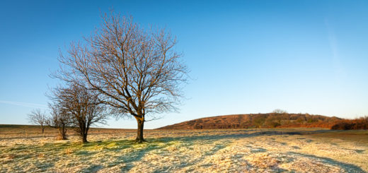 Frost - Cross Plain, Mendip Hills, Somerset, UK. ID JB1_3668