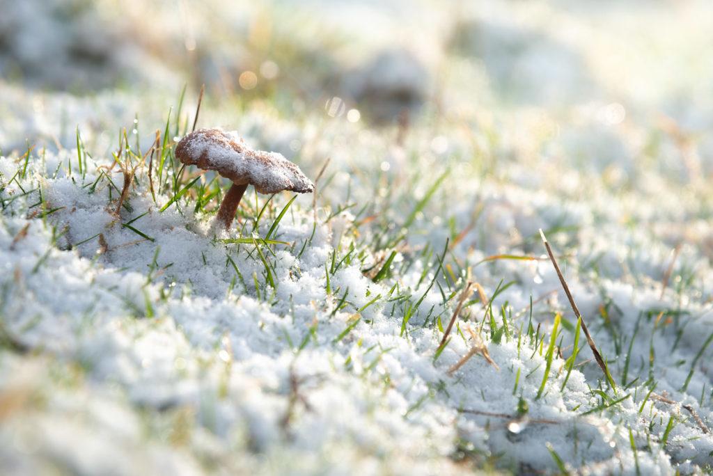 Fist snow of the year - Cooks Fields, Mendip Hills, Somerset, UK. ID JB1_4830