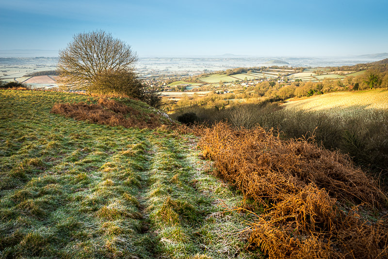 Lynchcombe in Winter - Somerset, UK. ID 808_8865