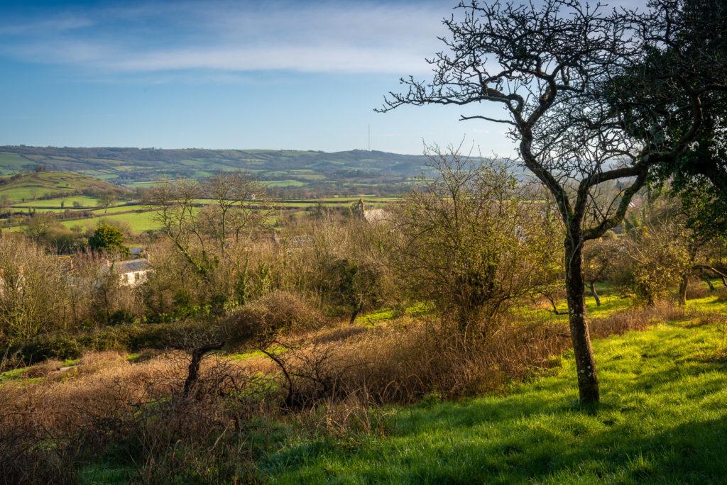 Henton - Somerset, UK. ID JB1_7924