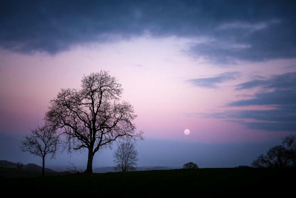 Worm Moon - Dungeon Farm, Croscombe, Somerset, UK. ID JB1_8915
