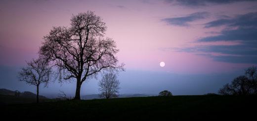 Worm Moon - Dungeon Farm, Croscombe, Somerset, UK. ID JB1_8915