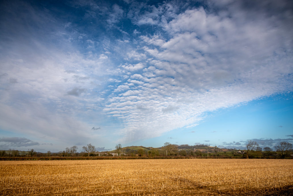 Altocumulus mackerel sky - Over Creech Hill, Lamyat, Somerset, UK. ID JB1_8942