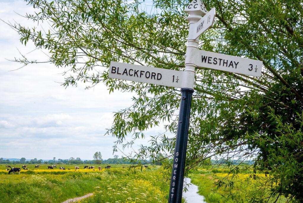 Blackford 1 1/4 - Tealham Moor, Nr Blackford, Somerset, UK. ID DSC_9064