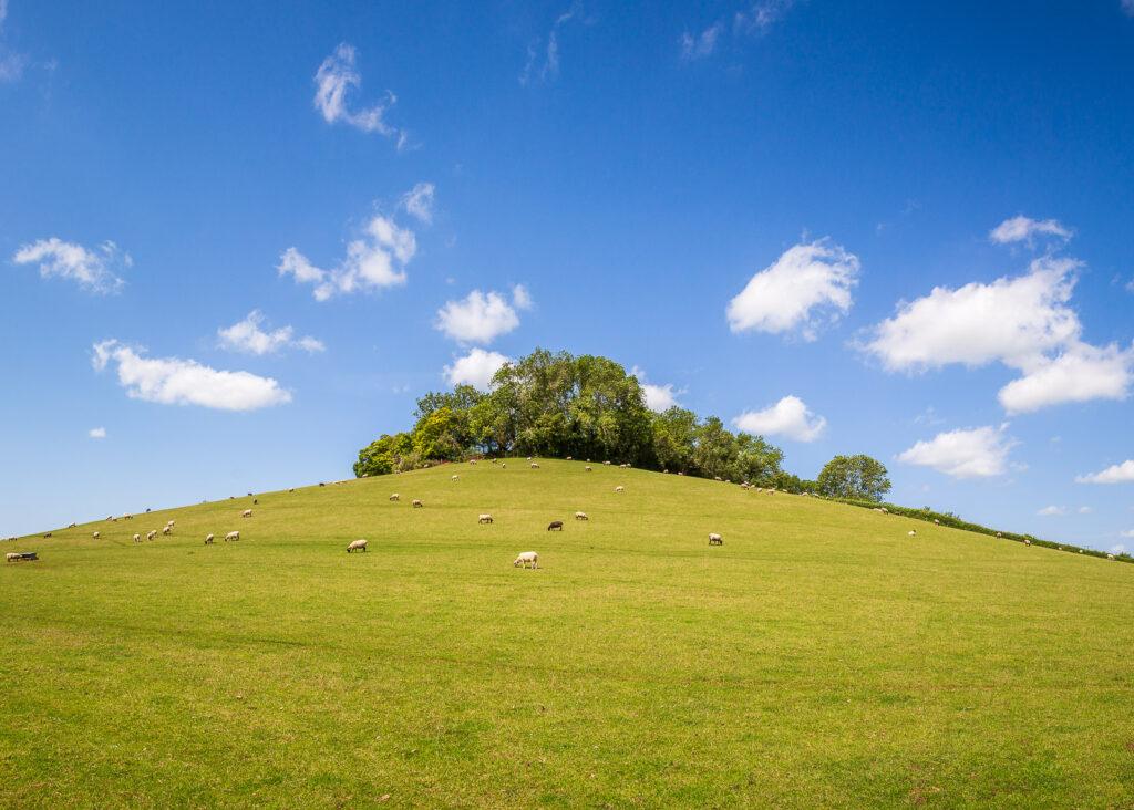 Henley Hill - Wookey, Somerset, UK. ID IMG_6474P