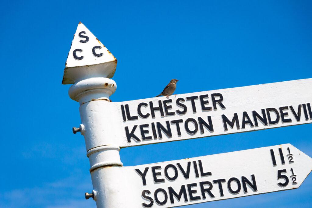 Ilchester 7 3/4 - Barton St David, Somerset, UK. ID IMG_6609