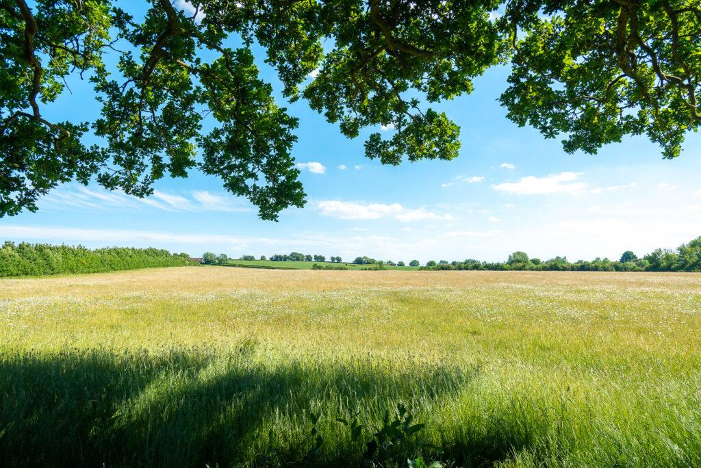 Babcary Meadows - Somerset, UK. ID JB1_3783