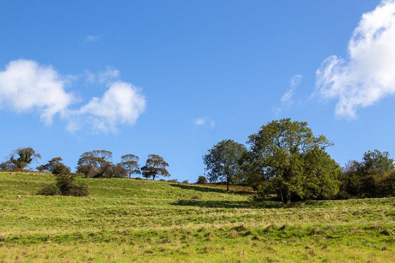 Terraces - Lynchcombe, Somerset, UK. ID IMG_7562