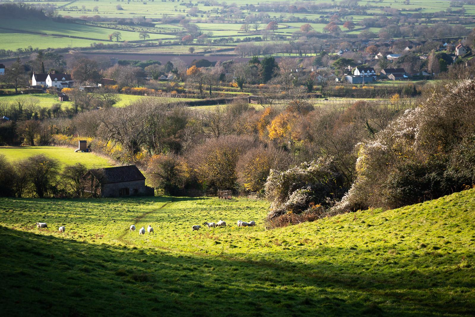 Lynchcombe - Mendip Hills, Somerset, UK. ID JB1_4769