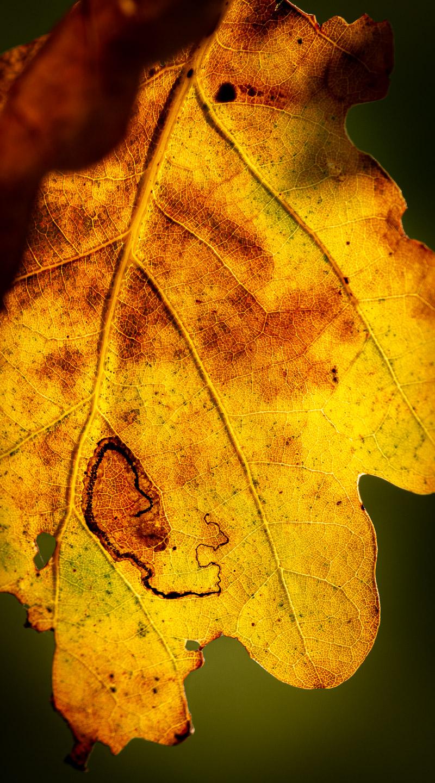 Autumn Leaves - Lynchcombe, Somerset, UK. ID 826_2809