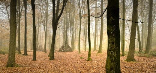 Autumn Colours - Stock Hill Woods, Mendip Hills, Somerset, UK. ID IMG_0482