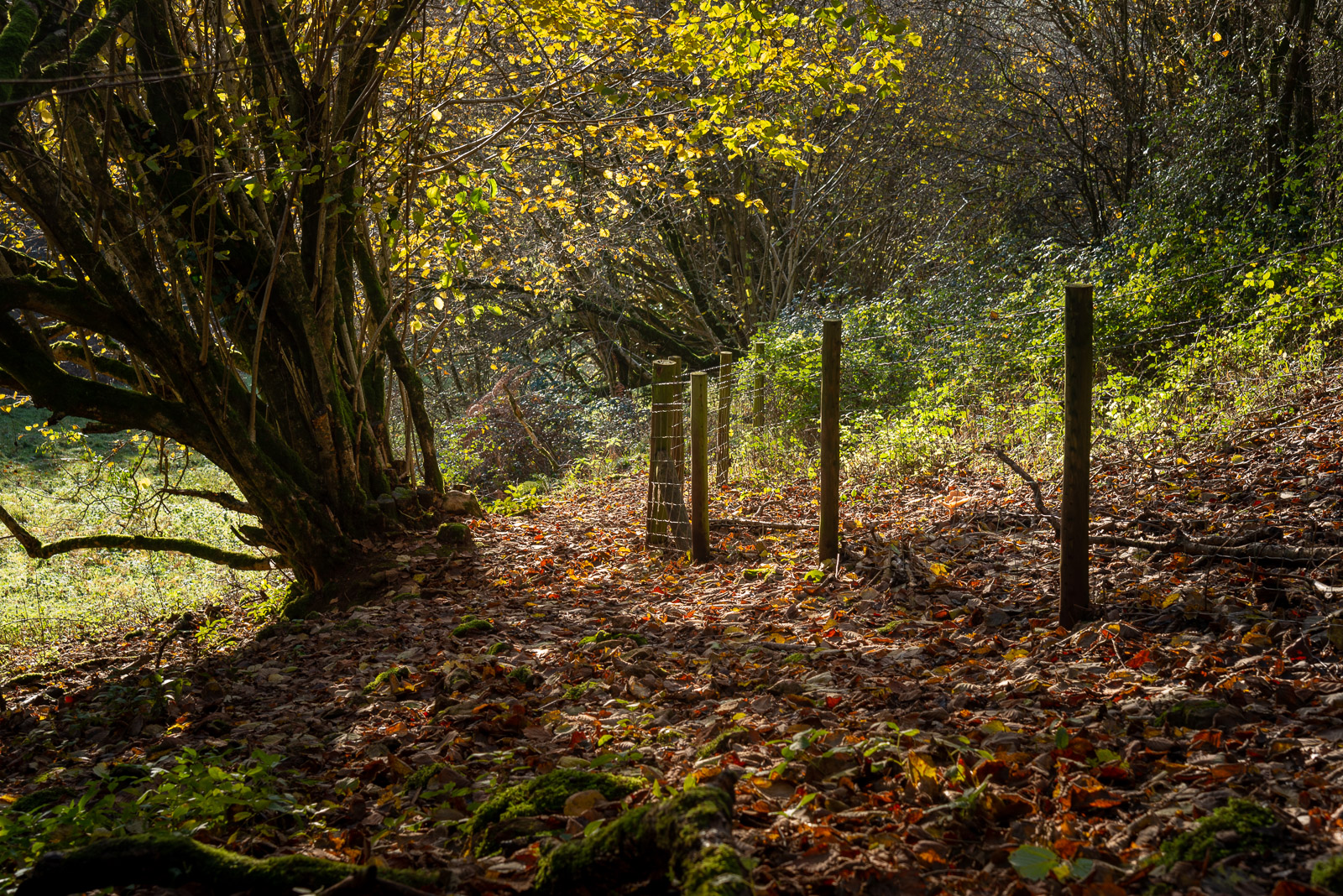 Lynchcombe - Mendip Hills, Somerset, UK. ID JB1_4822