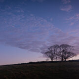 Beach trees and the cloud - Cooks Fields, Somerset, UK. ID JB1_8567
