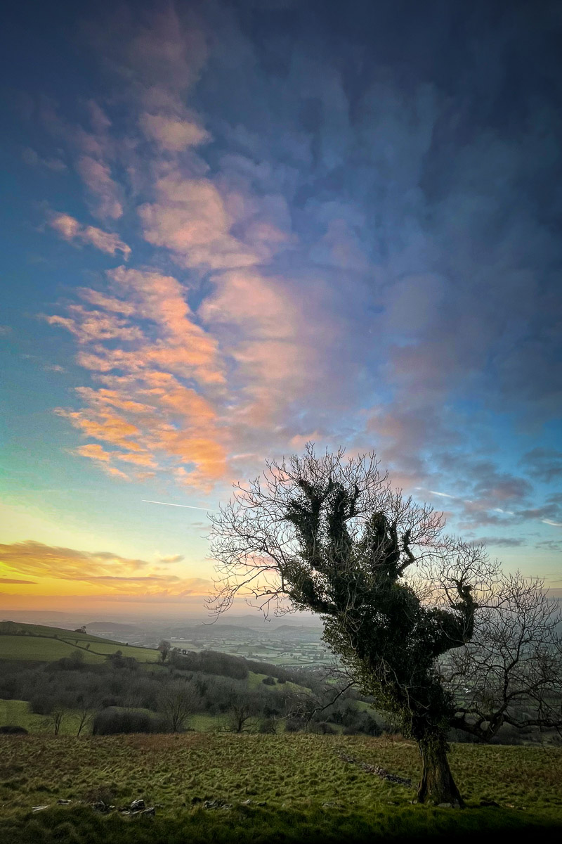 Tree and Clouds - Lynchcombe, Somerset, UK. ID IMG_1210