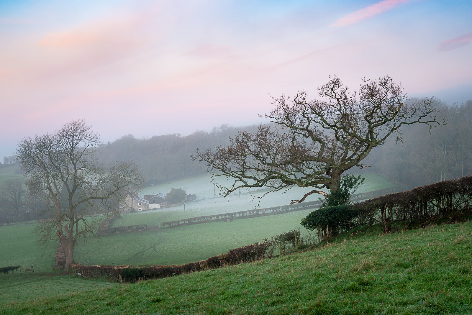 Dawn at Beryl Farm - Wells, Somerset, UK. IDJB1_0090