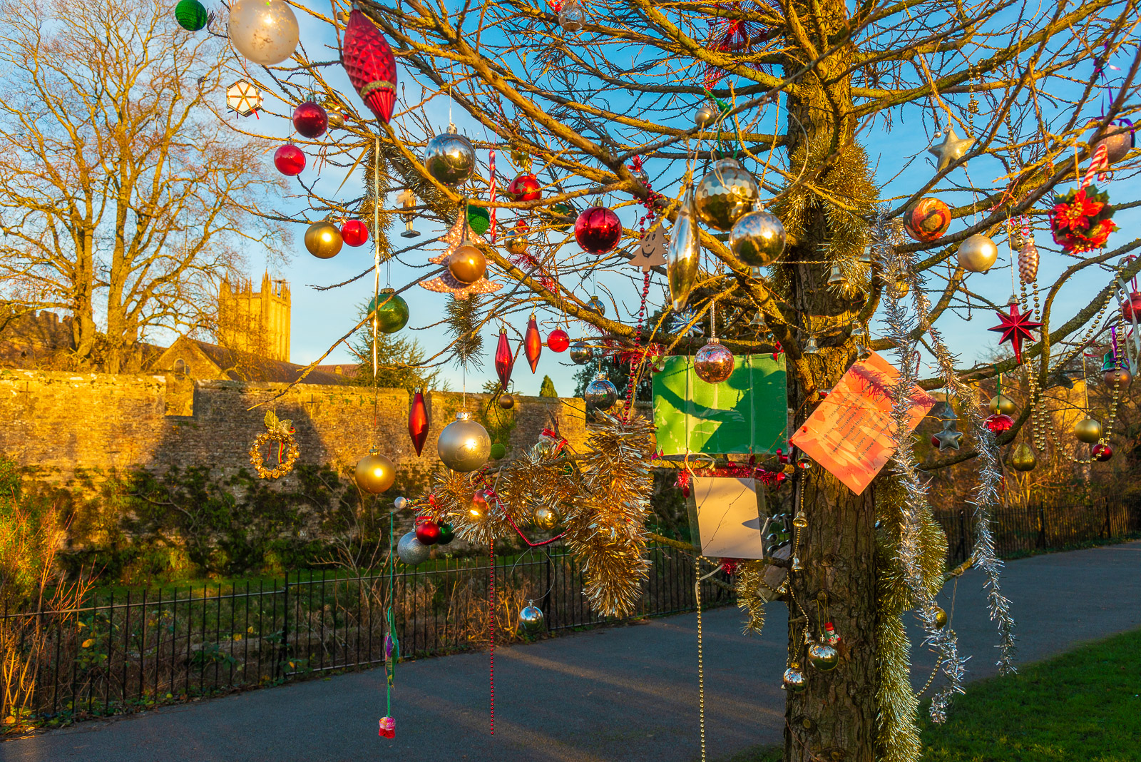 Christmas Tree - Bishops Palace, Wells, Somerset, UK. ID IMG_1487