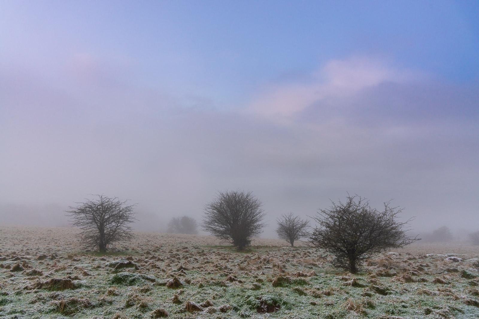 Dearleap - Mendip Hills, Somerset, UK. ID JB1_1107